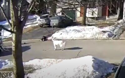 Σκύλος σταματά διερχόμενο αυτοκίνητο και ζητάει βοήθεια για το αφεντικό του! (Video)